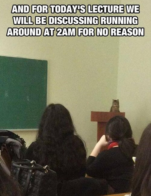 Cats,crazy,school