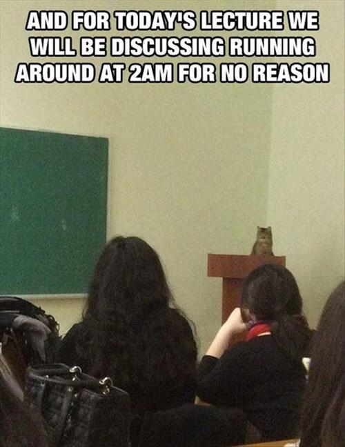 Cats crazy school - 8248971776