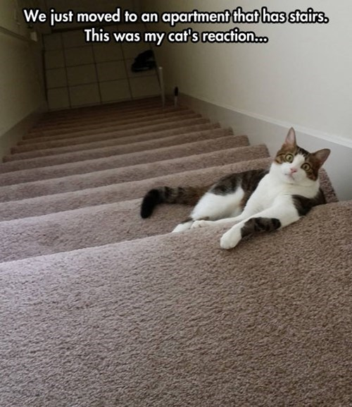 Cats exercise stairs - 8248975104