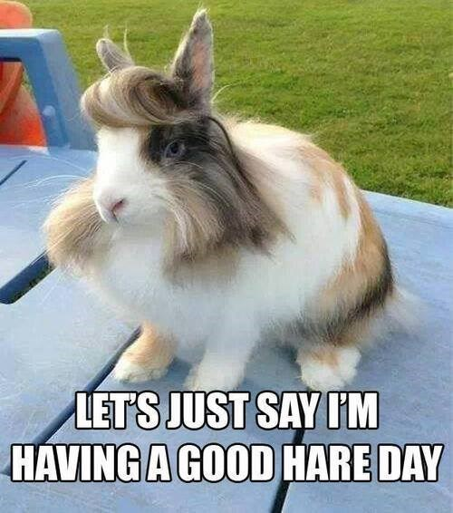 rabbits,hair,puns