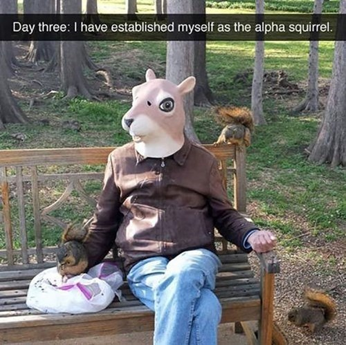 funny masks squirrels - 8249005568