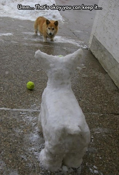 dogs,corgi,creepy,fetch,snow,funny