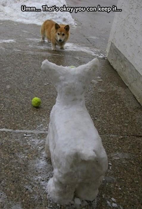 dogs corgi creepy fetch snow funny - 8249029376