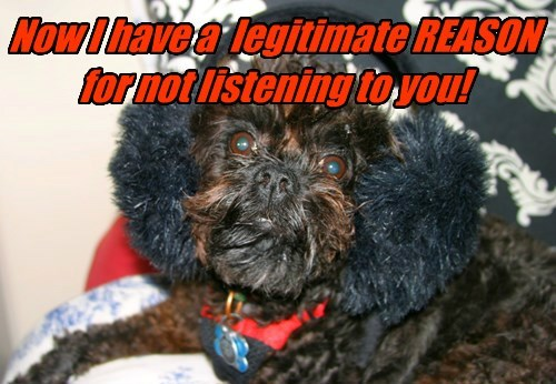dogs reason not listening caption