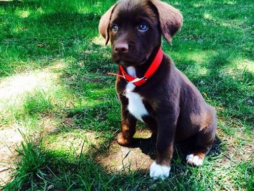 puppies eyes cute - 8249101312