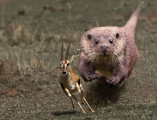 list,internet,otters,photoshop battle