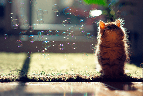 Cats cute bubbles kitten squee - 8249951744