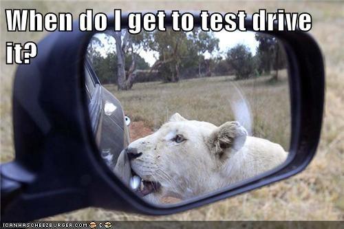 cars funny puns lions - 8249966080