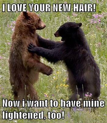 cute bears hair - 8249969152
