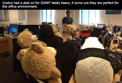 giant,Office,monday thru friday,teddy bear