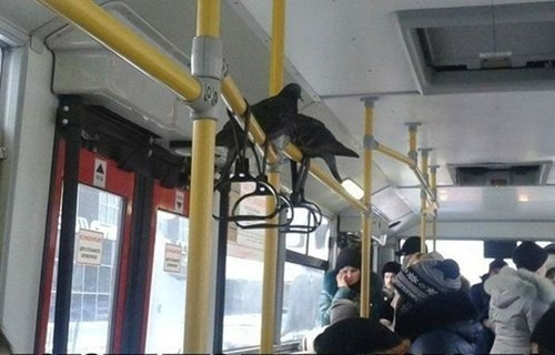 bus,birds,commute,monday thru friday