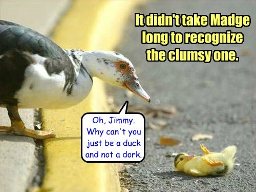 ducks,clumsy,ducklings