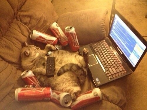 beer,Cats,drunk,funny,after 12,g rated