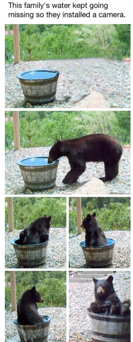 caught on camera,bears,bath,funny