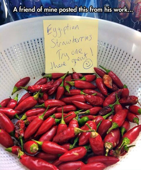 strawberries,egypt,coworkers,peppers