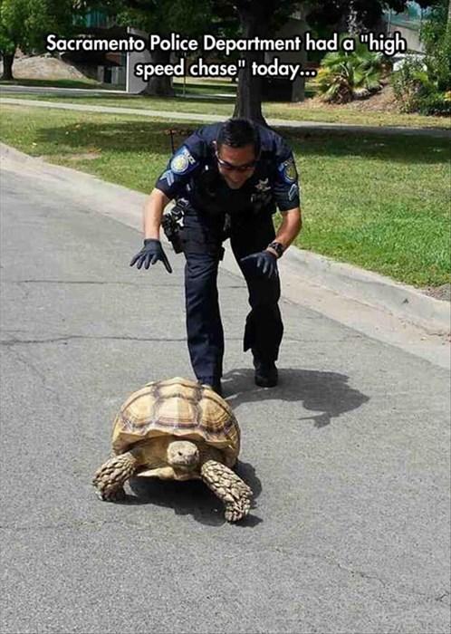 tortoise funny police