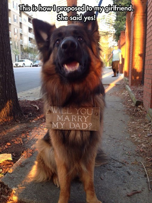 cute dogs proposal