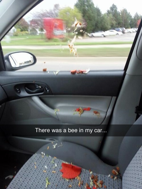 bees cars snapchat fail nation g rated - 8250252800