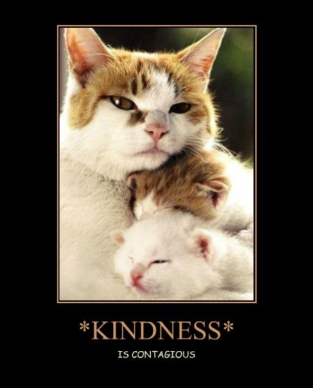 cute,kitten,kindness