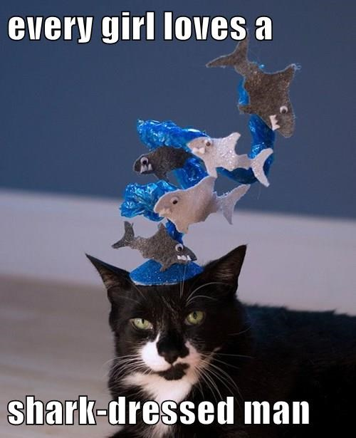 Cats,funny,sharks,hats,zz top