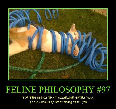 FELINE PHILOSOPHY #97