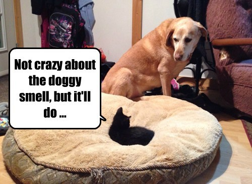 Cats,dogs,dog bed,steal