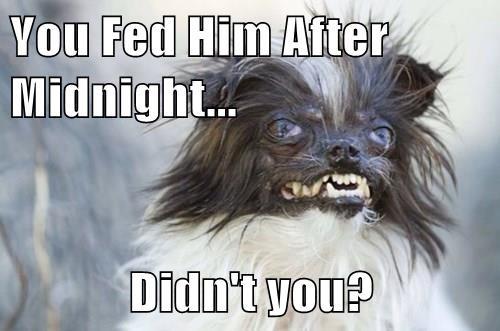 dogs gremlins ugly - 8251009792