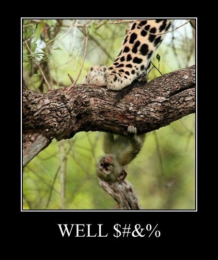 leopard funny screwed monkey wtf - 8251068160