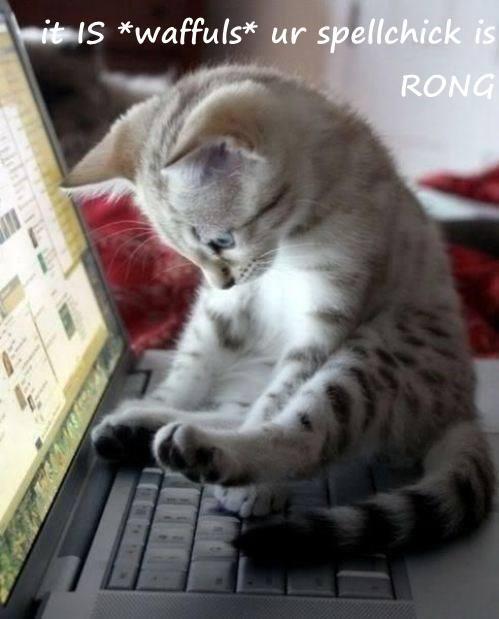 cute spellcheck Cats waffles - 8251439104