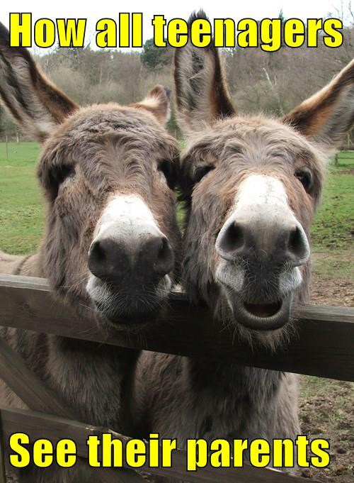 donkeys,teens,parents