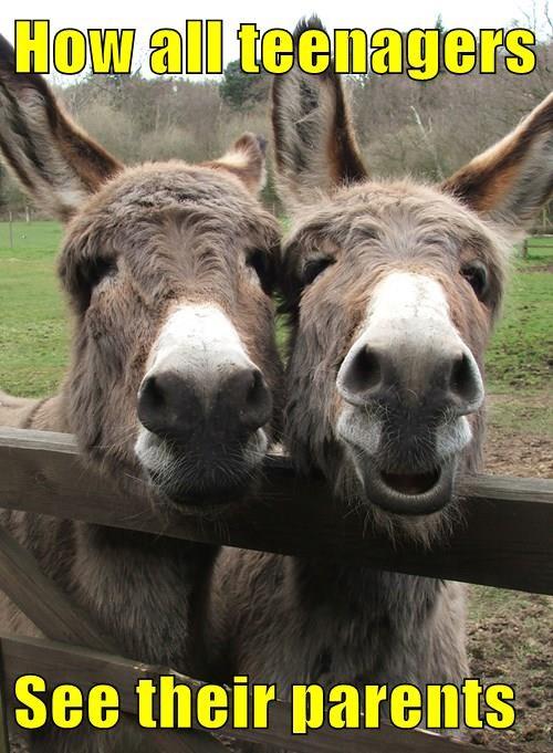 donkeys parents - 8251599616