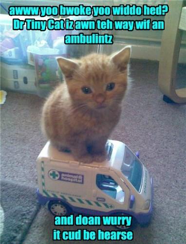 awww yoo bwoke yoo widdo hed? Dr Tiny Cat iz awn teh way wif an ambulintz and doan wurry it cud be hearse