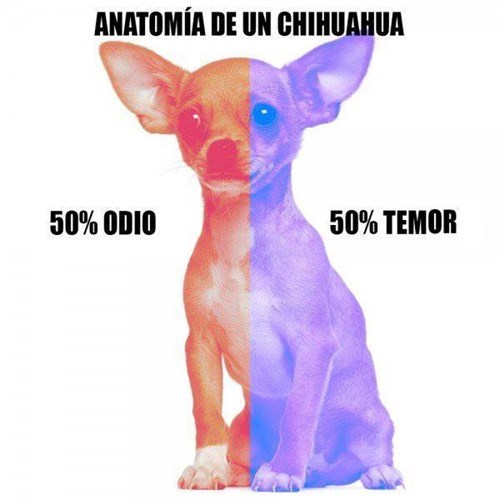 Memes bromas animales perros - 8251967488