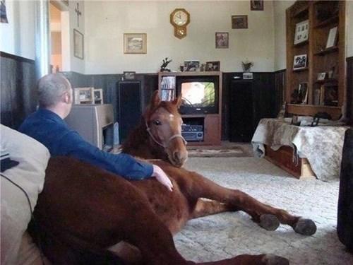 wtf horses - 8252130048