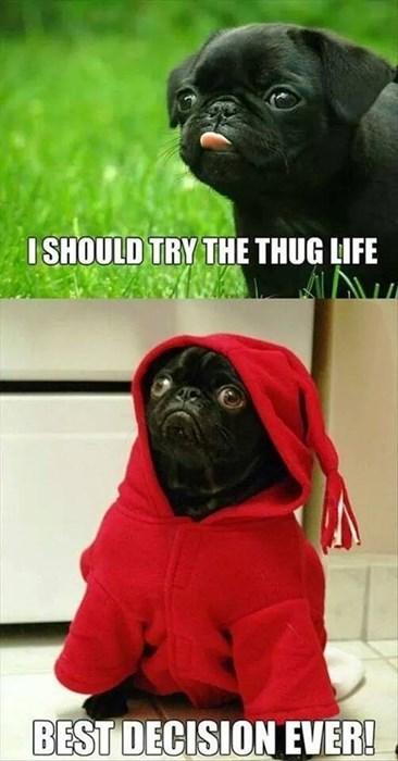 dogs,pug life,pugs,thug life