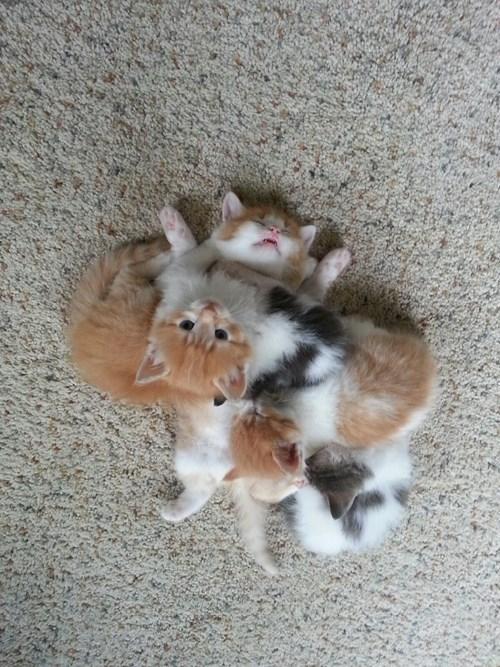 kitten squee sleeping snoring - 8252260608