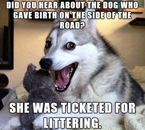 dogs funny puns - 8252337664