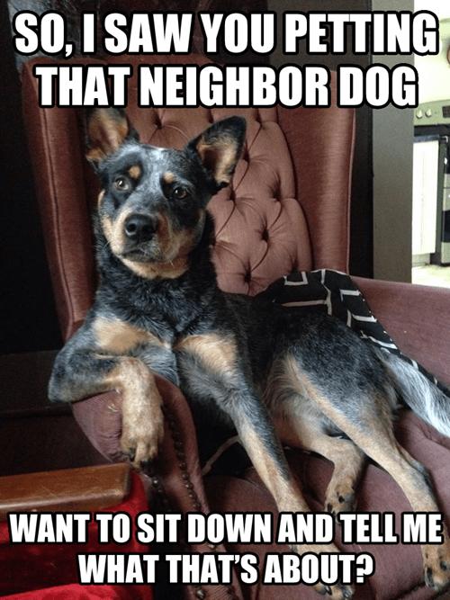 dogs jealous - 8252396800