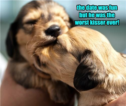 dogs cute kissing funny dating - 8252990464
