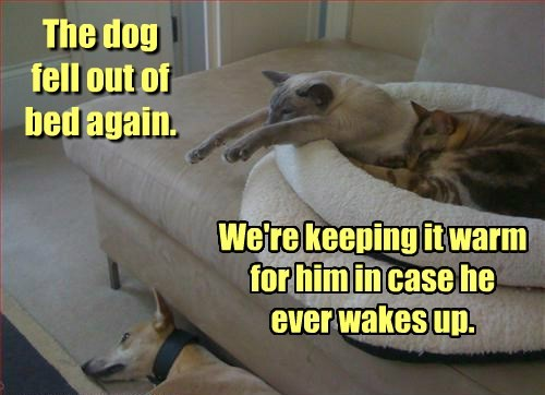 dogs bed Cats funny - 8253225984