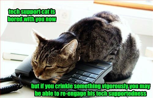 tech support cat is bored with you now but if you crinkle something vigorously you may be able to re-engage his tech supportedness