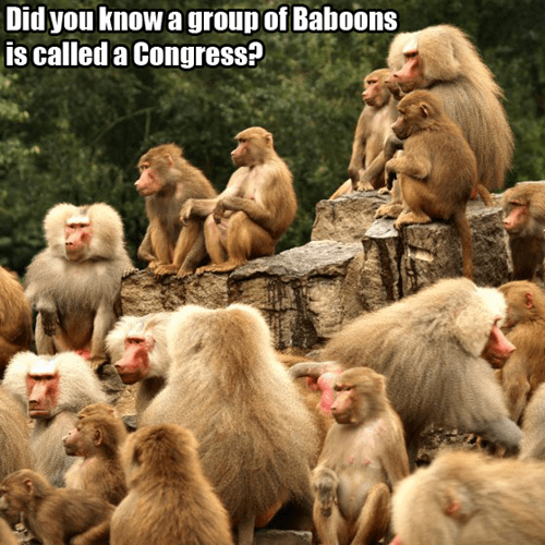 baboons,Congress