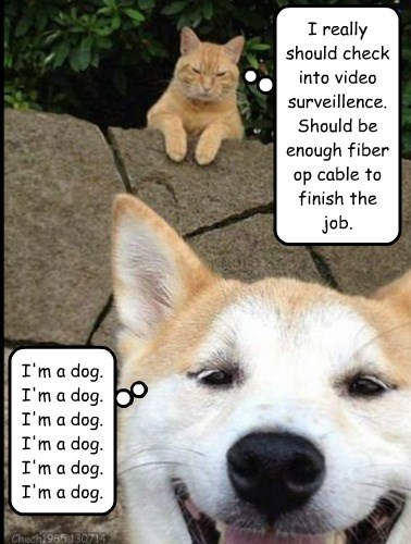 Cats dogs dumb differences - 8254238464