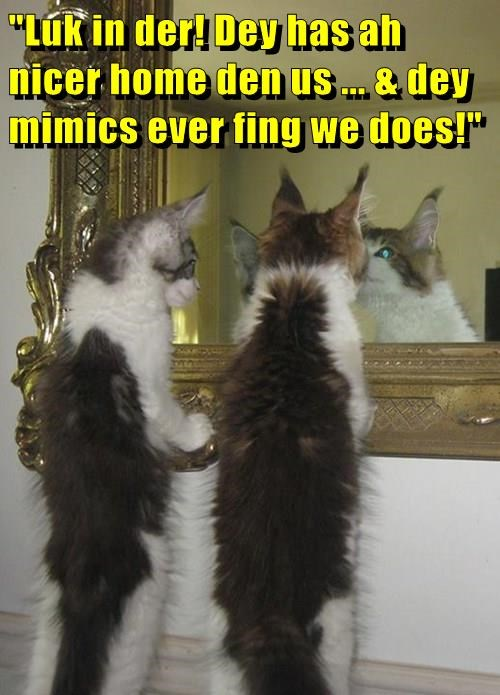 Cats cute mirrors - 8254239488
