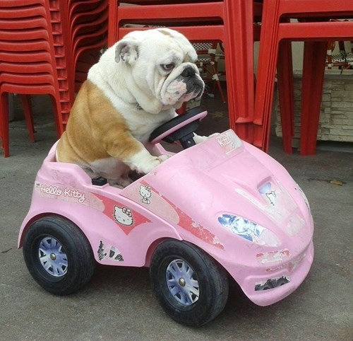 cars,dogs,embarrassing,funny