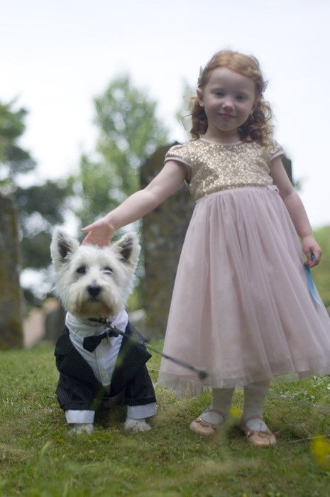 cute dogs tuxedo weddings