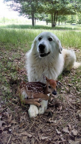cute dogs friends fawn squee - 8254286080