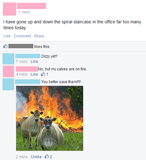 cows puns workout