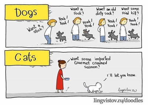 Cats,dogs,web comics