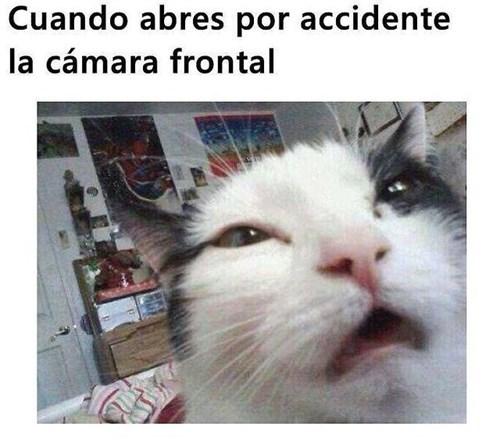 Memes fotos animales gatos bromas - 8255269632